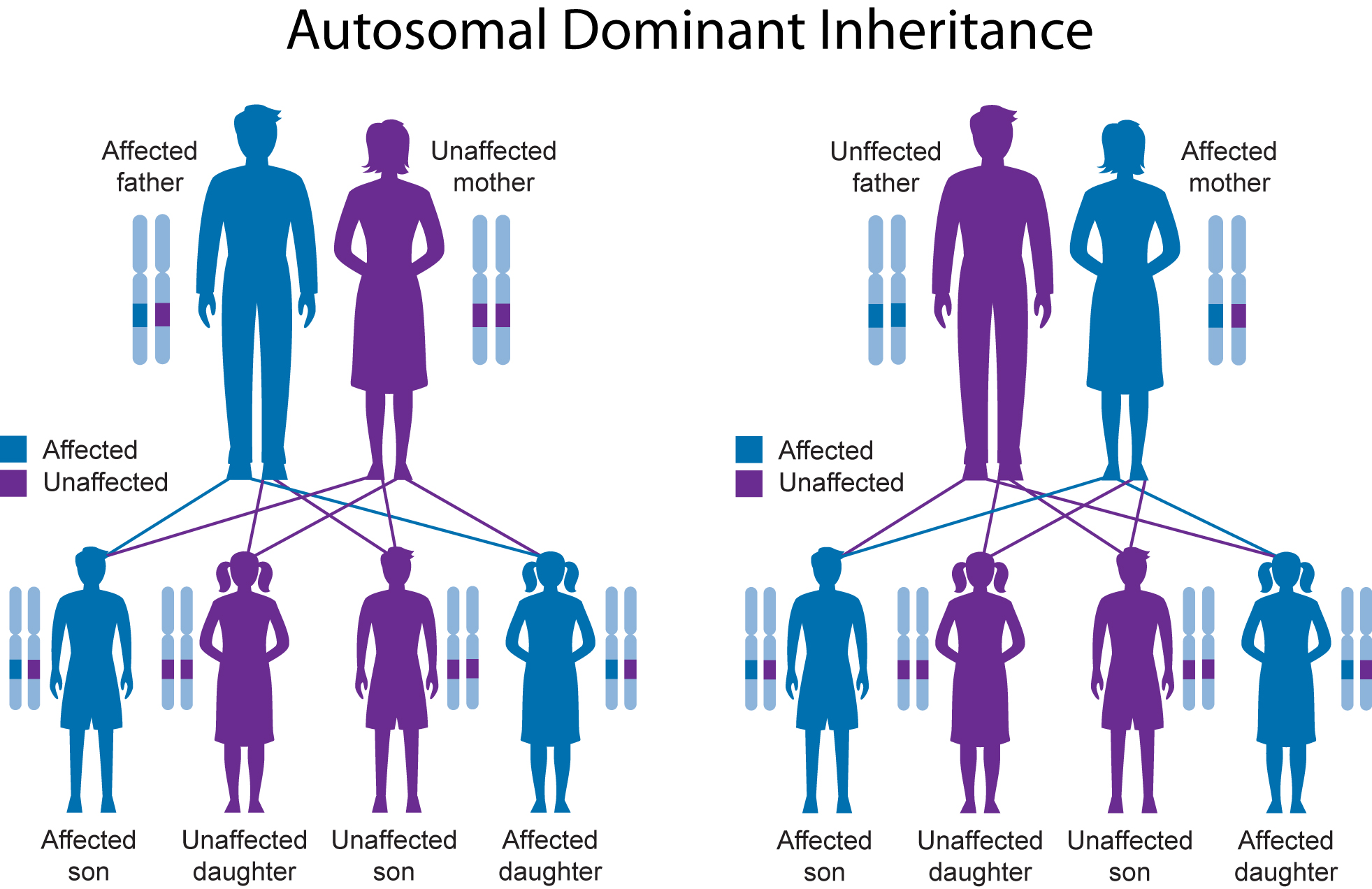 Inheritance: Genetics And Inheritance